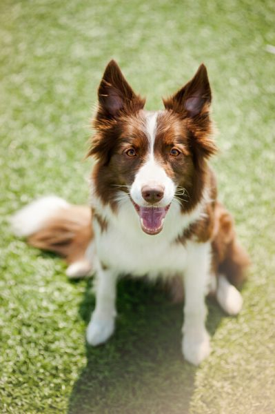 Pet Dentistry in Round Rock, TX